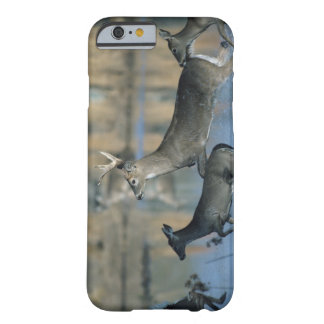 Herd of whitetail deer running through water barely there iPhone 6 case