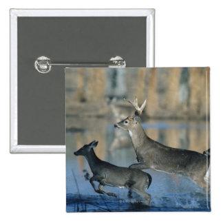 Herd of whitetail deer running through water button