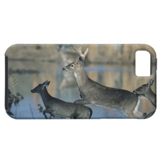 Herd of whitetail deer running through water iPhone 5 cover