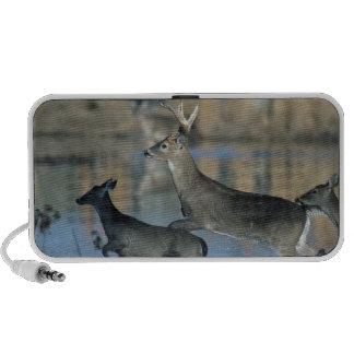 Herd of whitetail deer running through water laptop speaker