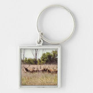Herd of Young Bull Elk Keychain