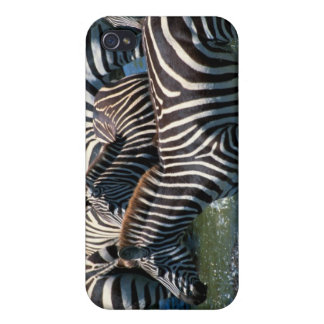 Herd of zebras 2 cover for iPhone 4