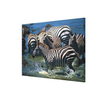 Herd of zebras canvas print