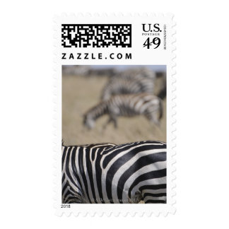 Herd of Zebras grazing Masai Mara Game Reserve Postage Stamp