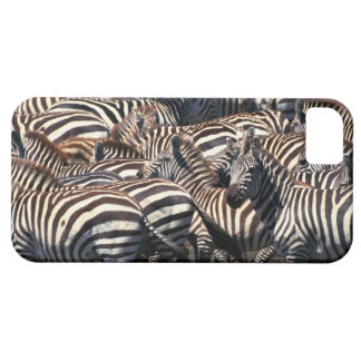 Herd of zebras iPhone SE/5/5s case