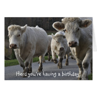 Herd you're having a birthday! greeting cards