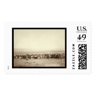 Herding Cattle at Moss Agate SD 1887 Postage