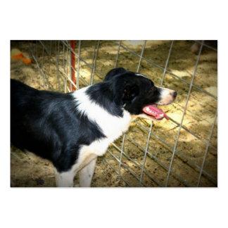 Herding Dog Business Cards