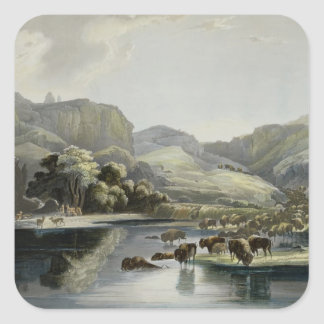 Herds of Bison and Elk on the Upper Missouri, plat Square Stickers