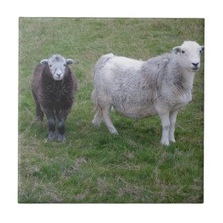 Herdwick Ewe and Lamb Tile