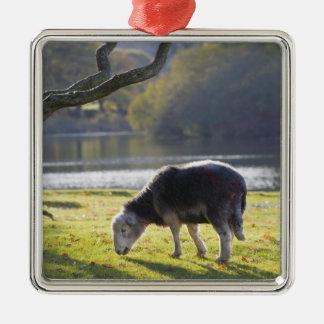 Herdwick sheep at Friars Crag, Derwentwater, Metal Ornament