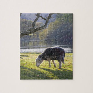 Herdwick sheep at Friars Crag, Derwentwater, Jigsaw Puzzle