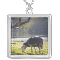 Herdwick sheep at Friars Crag, Derwentwater, Silver Plated Necklace