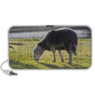 Herdwick sheep at Friars Crag, Derwentwater, iPod Speaker