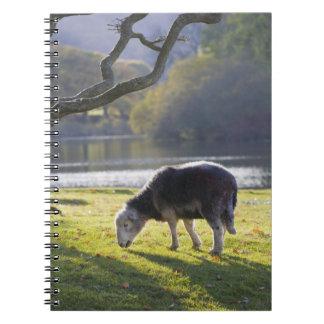 Herdwick sheep at Friars Crag, Derwentwater, Spiral Notebook