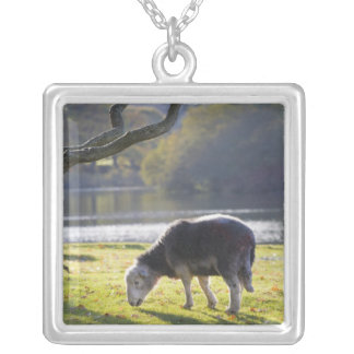 Herdwick sheep at Friars Crag, Derwentwater, Square Pendant Necklace