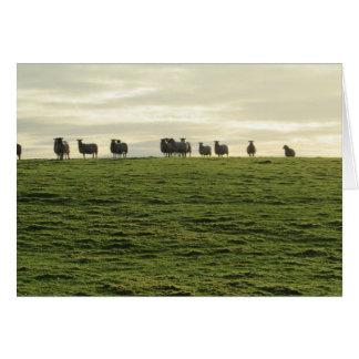 Herdwick Sheep Card