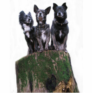 Here are the dogs on a log. cutout