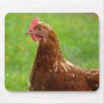 Here Chicken, Chicken Mousepad