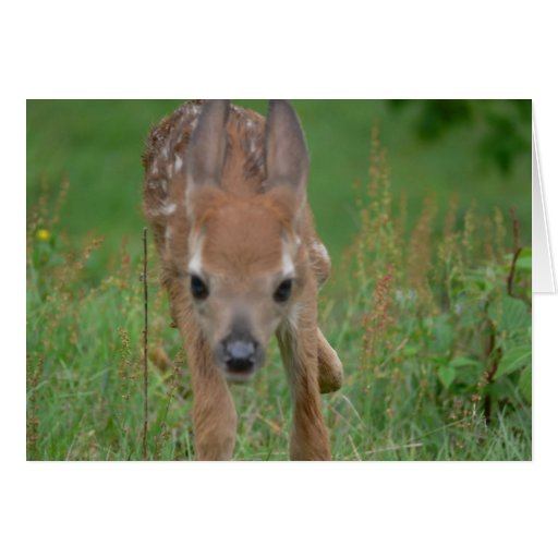 Here Comes Bambi Card