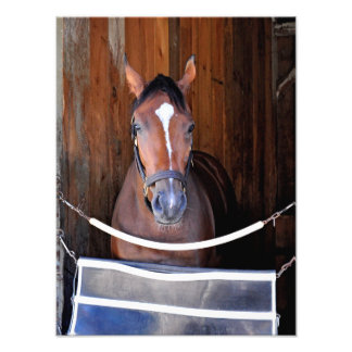 Here Comes Rosie in her Stall Photo Print