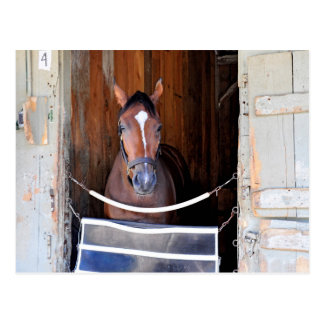 Here Comes Rosie in her Stall Postcard