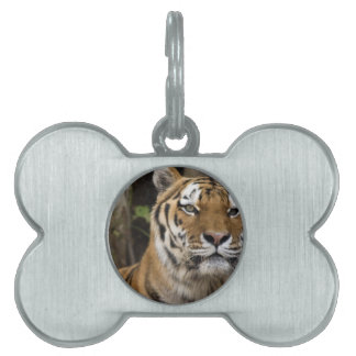 Here Endeth The Lesson Pet Name Tag