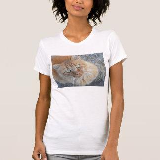 Here kitty,kitty,kitty tee shirt