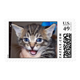 Here, Kitty, Kitty!! Postage