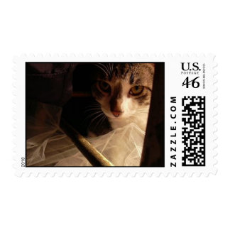 here kitty kitty postage stamp