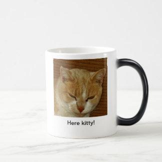 Here kitty! magic mug