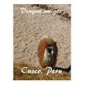 Here llama llama postcards