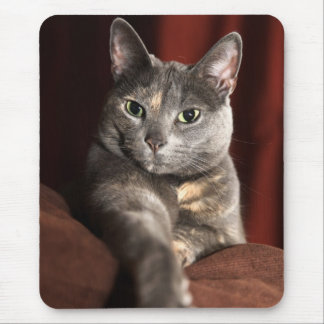 Here mousey mousey mouse pad