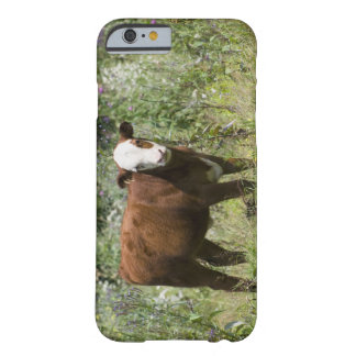 Hereford calf (Bos taurus) in prairie pasture Barely There iPhone 6 Case