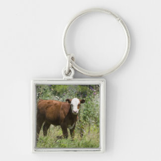 Hereford calf (Bos taurus) in prairie pasture Silver-Colored Square Keychain