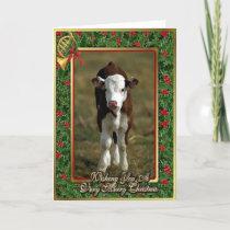 Hereford Calf Cow Blank Christmas Card