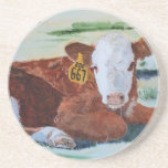 Hereford Calf Drink Coaster