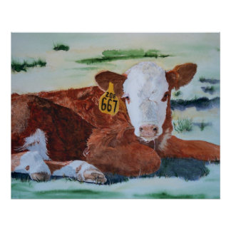 Hereford Calf Poster