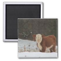 Hereford Calf - Rustic Farm Magnet