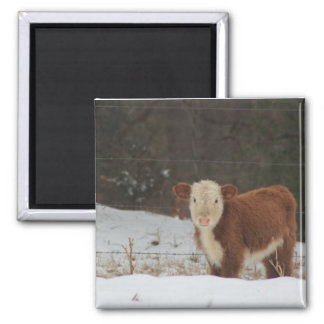 Hereford Calf - Rustic Farm Magnet