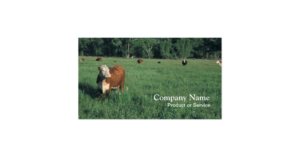 hereford cattle business card zazzle. Black Bedroom Furniture Sets. Home Design Ideas