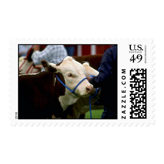 Hereford Cattle Postage