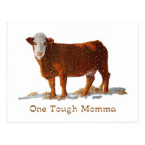 Hereford Cow: One Tough Momma: Mother's Day Postcard