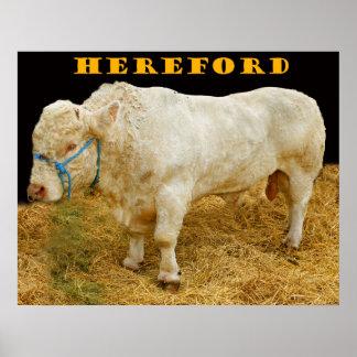 hereford print