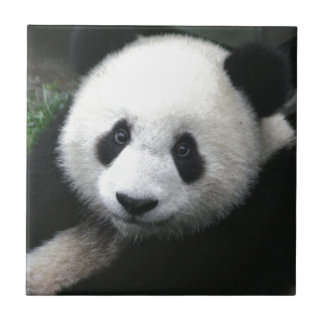 Here's looking at you baby panda cub tile