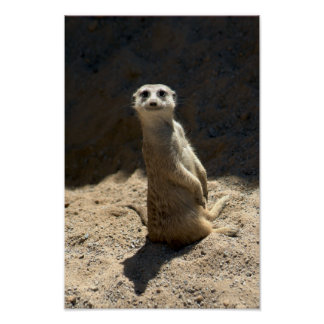 Here's Looking at You - Meerkat Poster