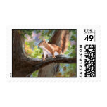 Here's Looking at You Squirrel Postage Stamp