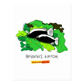 Herichthys bartoni postcard