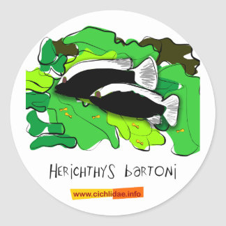 Herichthys bartoni stickers