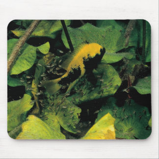 Herichthys labridens from Media Luna Mouse Pads
